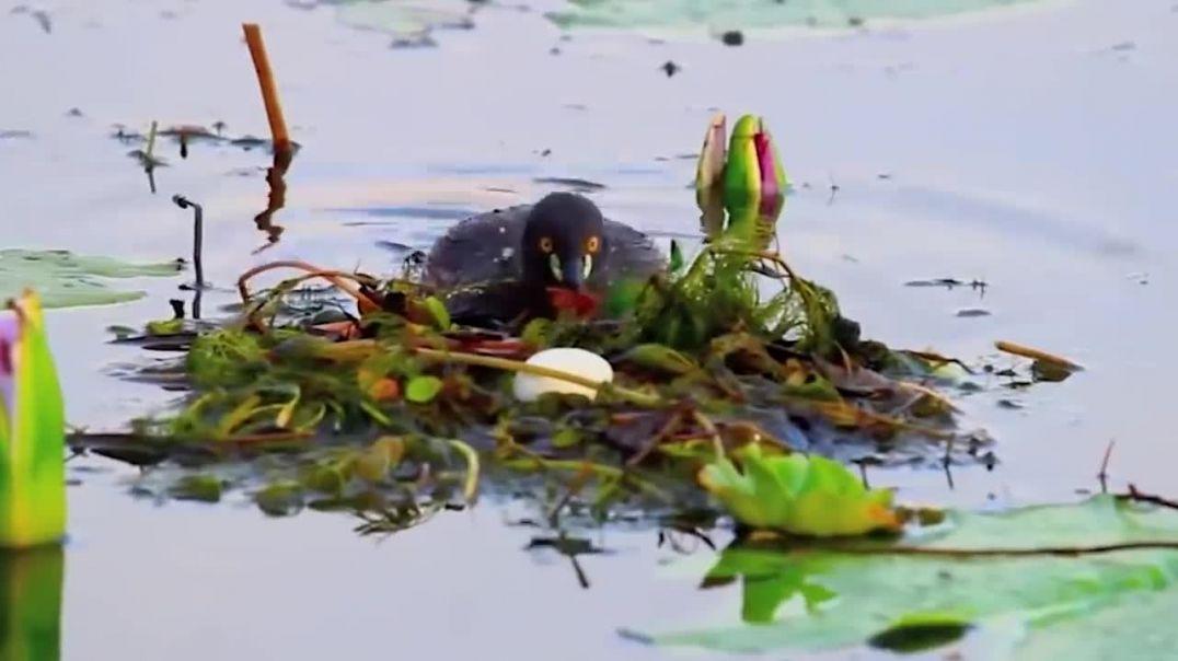 ১০ টি এমন পাখির বাসা যা দেখার জন্যও কপাল লাগে _ আপনিও দেখে নিন _ Bird Nests Around The World