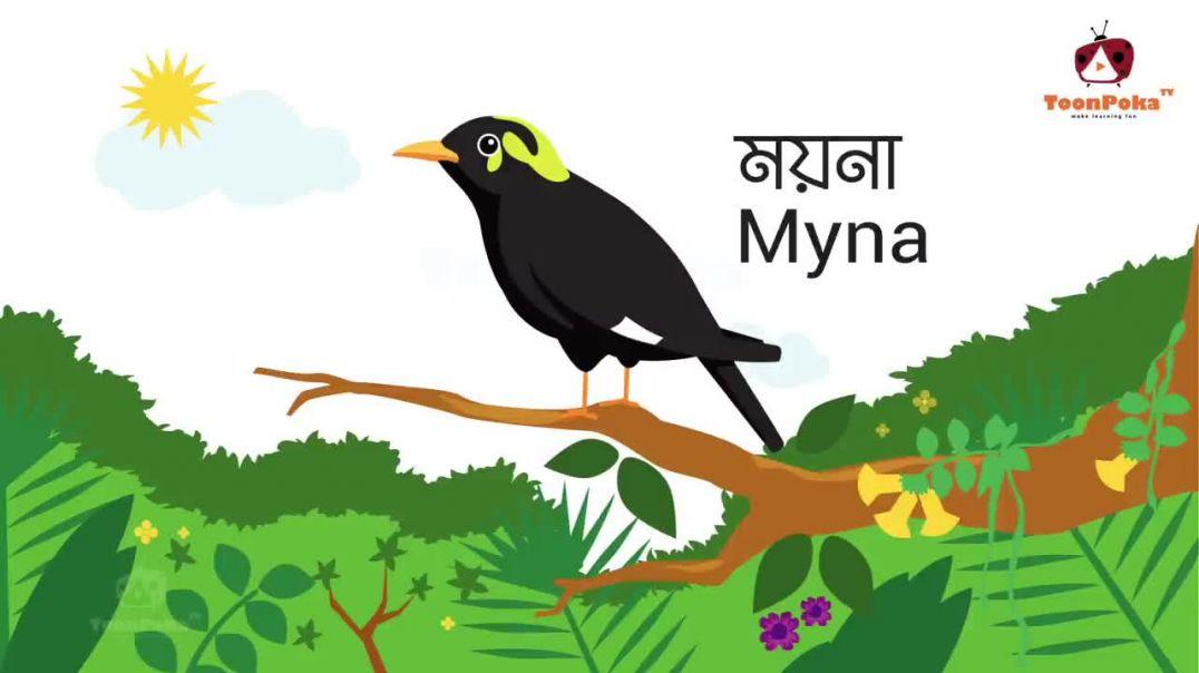 তোমরা কি ভাই বলতে পারো ১০ টি করে পাখির নাম _