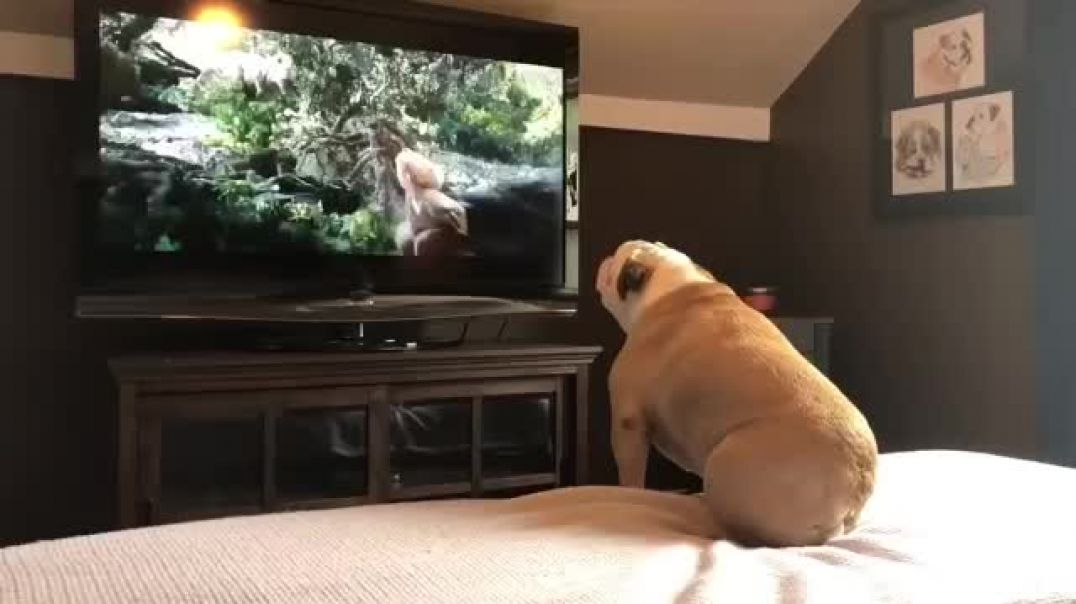 Bulldog_Has_Incredible_Reaction_To_Actress_In_Trouble(360p)