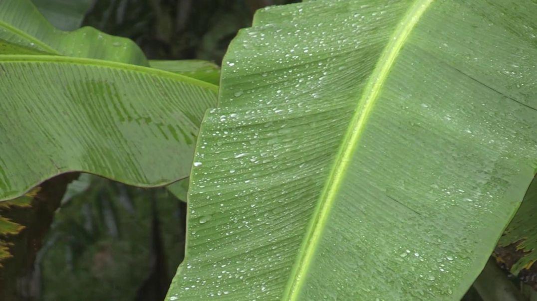Rain Time nature