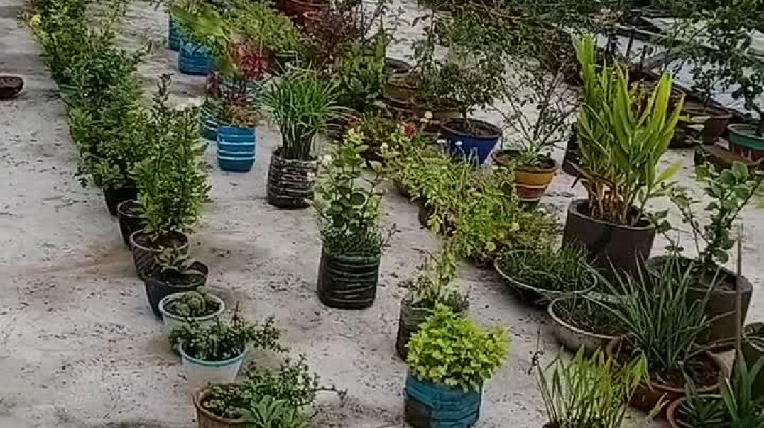 Garden/ছাদ বাগান