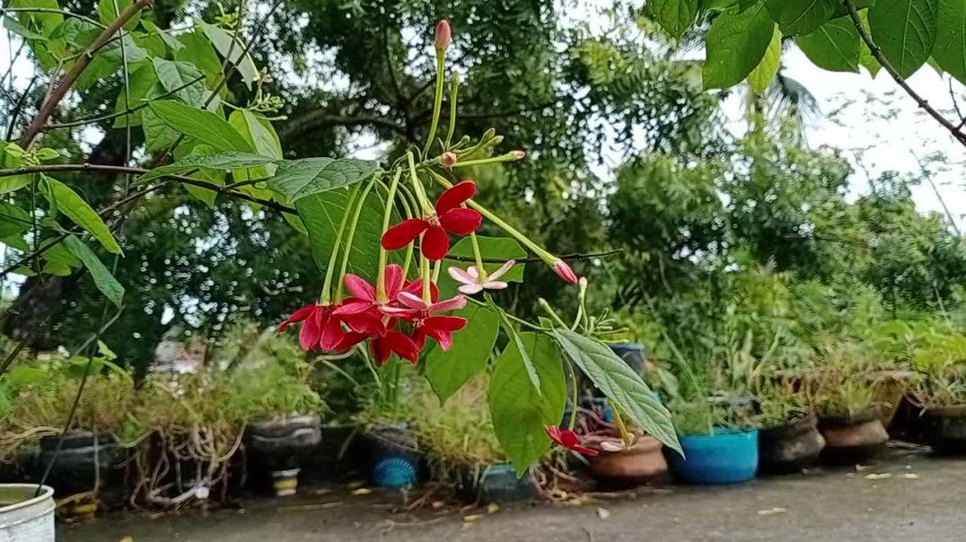 বাগানের মধুমন্জুরী/Flowers